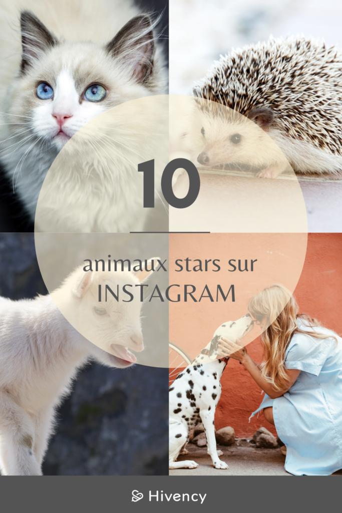 animaux_stars_instagram